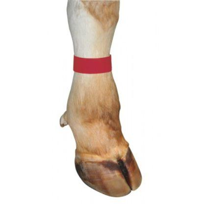Märkmelint jalale punane