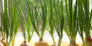 Vitamiinid aknalauale kasvama!